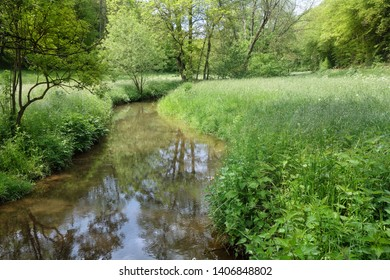 Creek in natural environment in the Eifel in Germany