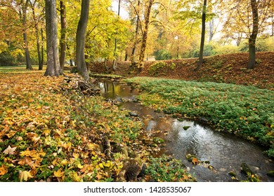Creek in the park in autumn season