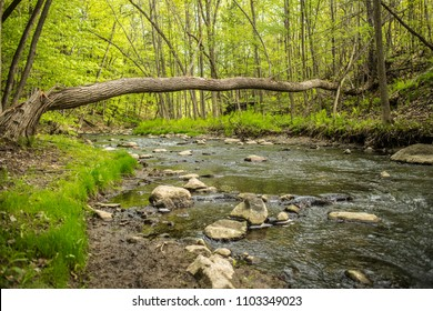 creek river forest