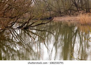 Creek in willow forest,  Biesbosch National Park, Netherlands