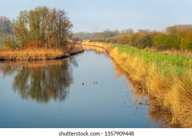 Creek with yellow reed plants at the banks. The photo was early in the morning taken in the Dutch nature reserve Biesbosch near the village of Werkendam in North Brabant. Spring has just begun.