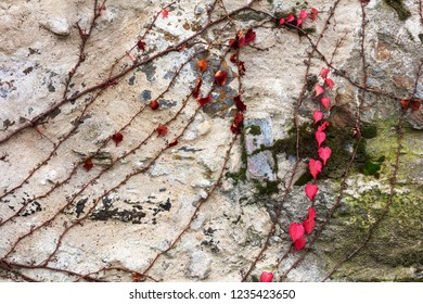 creeper on stone wall, abstract grunge background