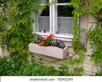 Creeper overgrown window decorated with flowers in Finland
