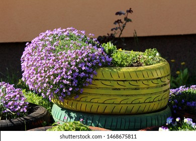 Creeping phlox or Phlox subulata or Moss phlox or Moss pink or Mountain phlox evergreen perennial flowering plant planted in colorful old tyre used as garden decoration on warm sunny spring day