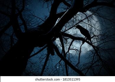 Creepy black crow croaking on tree branch under full moon at night