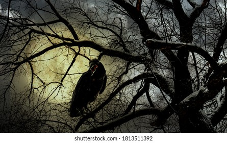 Creepy black crow croaking in scary forest on full moon night