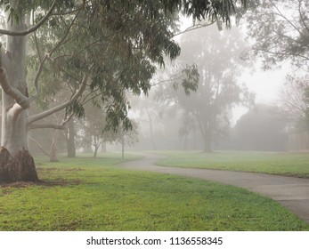 Creepy dark bike path with tree line and heavy fog, Melbourne, Australia, 2018