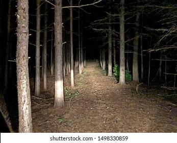 Creepy drive through the night woods