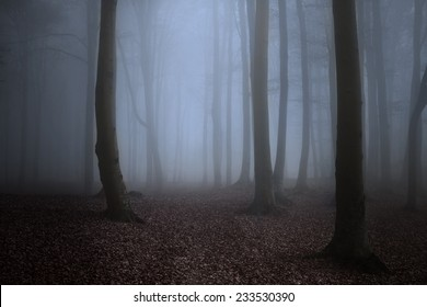 Creepy Forest Images, Stock Photos & Vectors | Shutterstock
