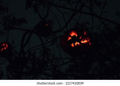 Creepy jack-o-lanterns up in a tree