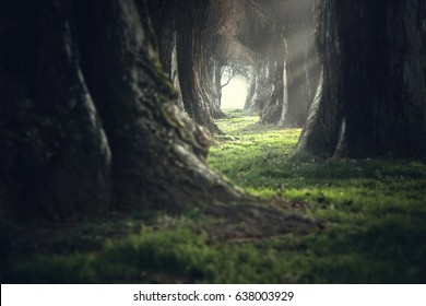 creepy mystic magic deep forest