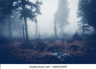 Creepy mystical forest with a thick fog. Heat and cold