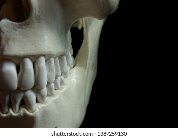 Creepy skull mandible and maxilla on a dark background. Great for halloween or horror stuff.