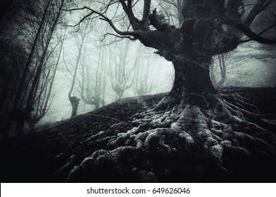 creepy tree with twisted roots and grungy textures