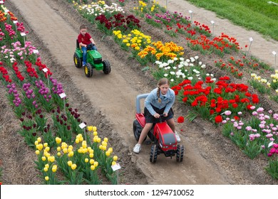 Creil, The Netherlands - April 27, 2018: Garden with exposition of several kind of tulips in the Netherlands. Two children are playing with a toy tractor
