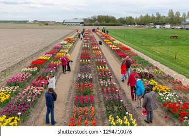 Creil, The Netherlands - April 27, 2018: Garden with exposition of several kind of tulips in the Netherlands. Several visitors are admiring the colorful flowers.