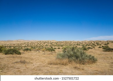 Creosote bushes grow in the open desert of Carrizo Plain National Monument.