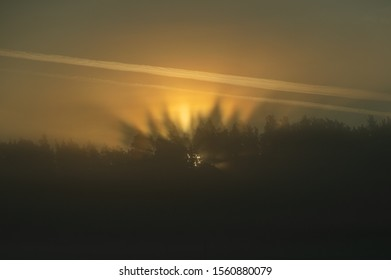 Crepuscular rays in a foggy morning coming through trees at golden sunrise over the forest - an atmospheric optical phenomenon, soft focus