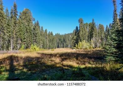 Crescent Meadow in autumn Sequoia National Park, California, USA