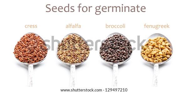 Cress, alfalfa, broccoli, fenugreek seeds for germination in spoon