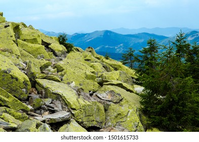 Crest of the mountain range with stone placers covered with green lichens and slopes with spruce forest in Carpathian Mountains at summer day