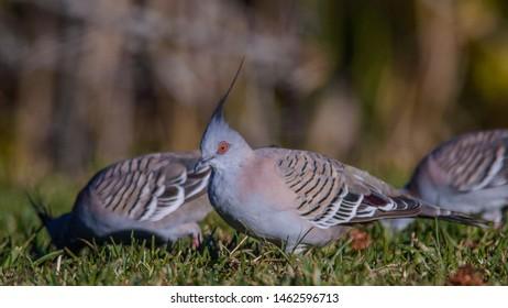 Imágenes, fotos de stock y vectores sobre Birds Crest