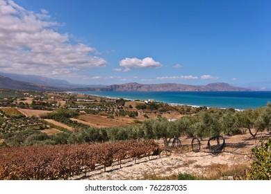 Cretan fields in the fall