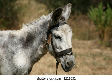 Crete / Donkey