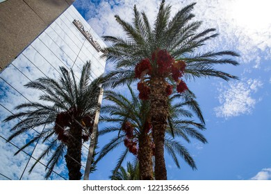 Crete / Greece - September 27, 2018: Tall palm trees in the city. Palm trees reflected in building windows, Crete in Greece.