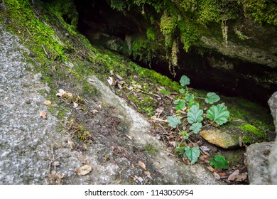 Crevice in rock