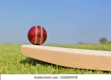 Cricket ball on cricket bat on green grass field.