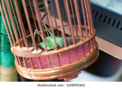 Cricket Bug Insect in Cage China Chinese Leaf Macro Photography Lucky Grasshoper