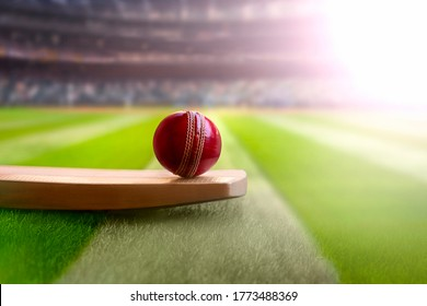 cricket leather ball resting on bat on the stadium pitch