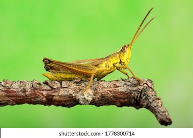 cricket on a stick and a green background