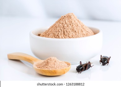 Cricket powder insect for eating as food items made of cooked insect meat in bowl and wood spoon on white background it is good source of protein edible for future. Entomophagy concept.
