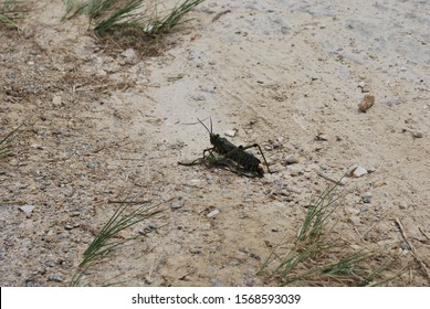 Cricket sitting on dirt road
