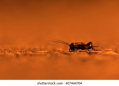 A cricket travels across the road under the orange glow of a streetlamp.