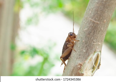 crickets on the tree, crickets on the leaves