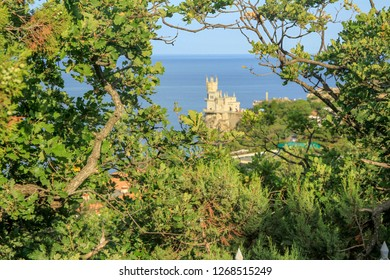 Crimea swallows nest beautiful view tree