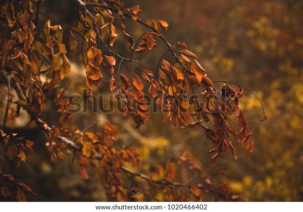 Crisp Autumn Leaves Stock Photo (Edit Now) 1020466402