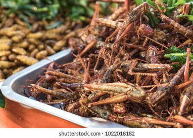 Crispy fried grashopers. Close up image of bizzare oriental food.
