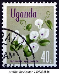 CROATIA ZAGREB, 19 MAY 2018: a stamp printed in Uganda shows Morning Glory, Ipomoea Spathulata, Flowering Plant, circa 1969