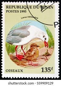 CROATIA ZAGREB, 26 DECEMBER 2016: a stamp printed in Benin shows the Black-headed Gull, Larus Ridibundus, Bird, circa 1995