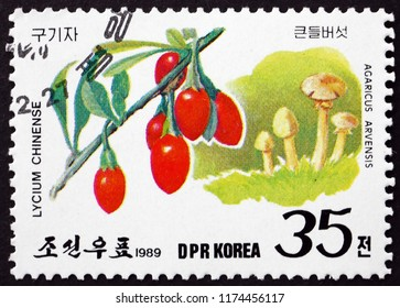 CROATIA ZAGREB, 29 JUNE 2018: a stamp printed in North Korea shows Lycium chinense and agaricus arvensis, wild fruits and mushrooms, circa 1989