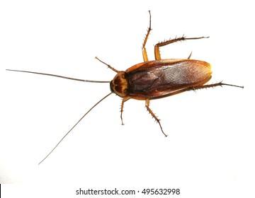 a crockroach in white background floor