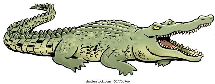 a crocodile