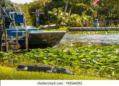 Crocodile with an airboat in the background