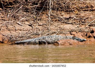 Crocodile in Canyon del Sumidero in Chiapas, Mexico