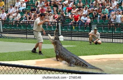 Crocodile display at Australia Zoo, after the death of Steve Irwin