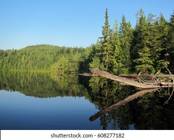 """Crocodile"" in the Elk Lake on the Sunshine Coast Trail, Canada"